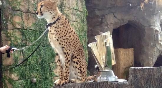Cheetah predicts Nascar winner